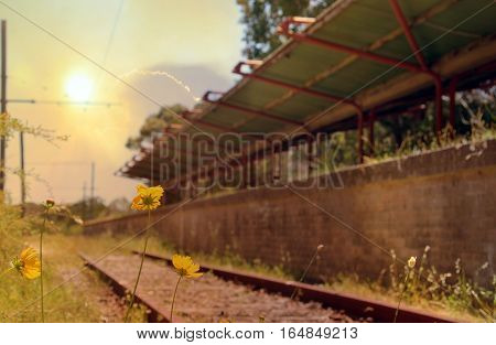 Flowers and weeds on train tracks in front of an abandoned railway station at sunset. Audley, New South Wales, Australia. Selective focus on flowers. retro toned.