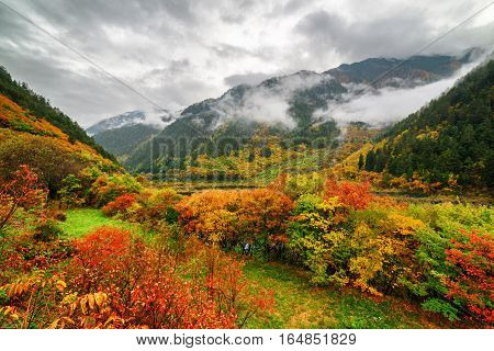 Amazing View Of Wooded Mountains In Fog And Colorful Fall Forest
