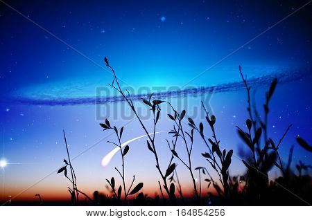 Alien Landscape - Silhouettes Of Grass Leaves With Galaxy And Falling Star In The Sky.