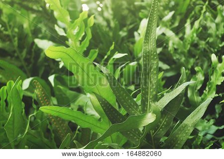 Close up of greenery fern leaves with spores
