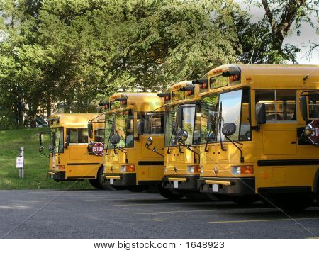 Buses In A Row