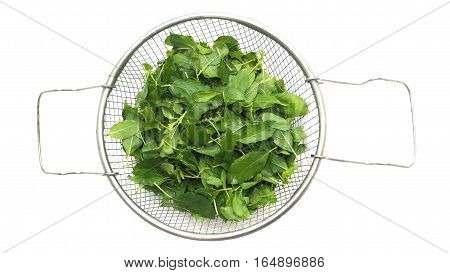 Basil herb Thailand decidedly wash clean put in colander aluminum raw materials for cooking fried rice background isolate white color.