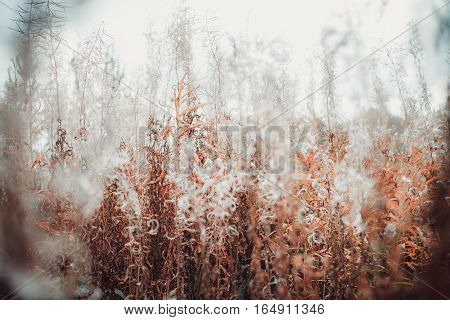 contrast in plants of unusual beauty, background