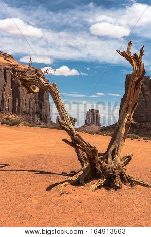View of a dead tree in Monument Valley, Arizona, Utah