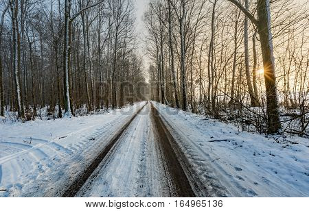 Landscape With Road In Winter Forest