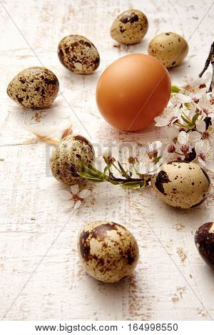 Spring quail eggs top view. Easter concept