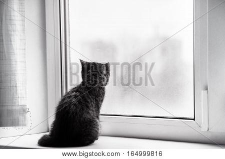 a little kitten on a window waits the hostess
