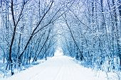 stock photo of winter landscape  - Winter - JPG
