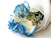 image of blue rose  - blue roses and white flowers - JPG