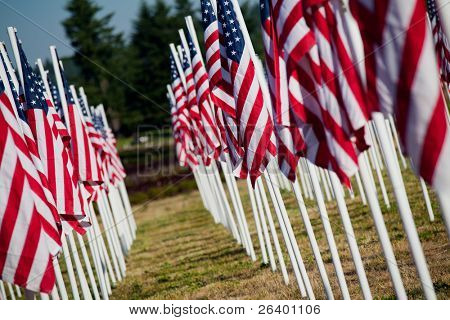 Memorial Day in USA - American flags arranged in rows outdoors