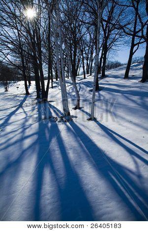 Winter sun silhouettes bare trees in the snow