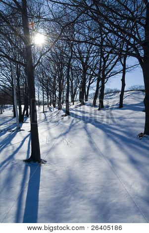 Winter sun silhouettes bare trees in the snow