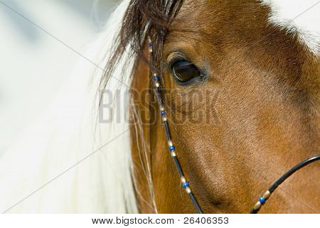 Beautiful Horses 74. See more in my portfolio