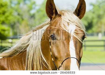 Beautiful Horses 128. See more in my portfolio