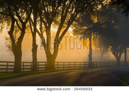 Brilliant sun light with fog 34