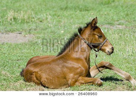 Pferd Pferde Baby und Stute Serie 15