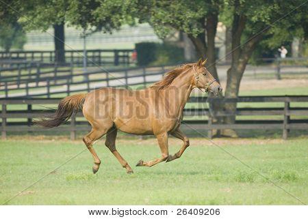 Baby-Pferd und Mare Pferde--Serie 11