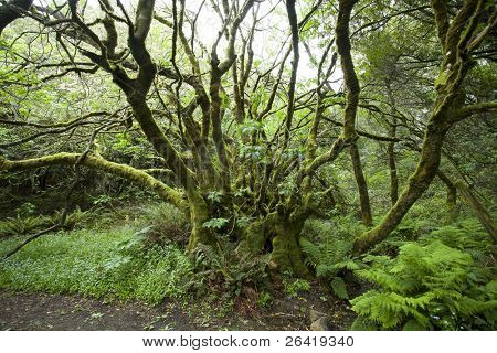 A Lush Moss Tree at Muir Woods