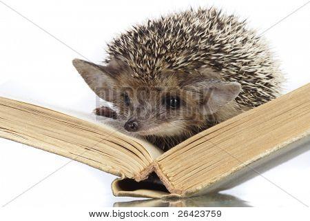 hedgehog on book