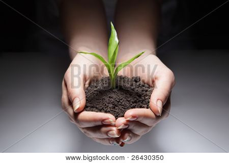 green sprout in woman hand