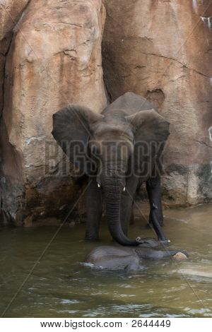 Mother Elephant Tending To Calf