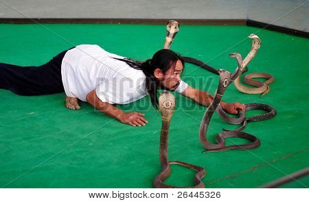 "PATTAYA, THAILAND - 8 NOVEMBER: ""Show of snakes"" performer play with cobra during a show in a zoo on November 8, 2009 in Pattaya, Thailand."