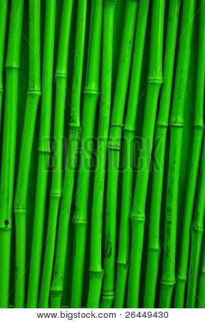 Green detailed bamboo texture