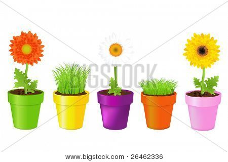 Colorful Pots With Daisies And Grass, Isolated On White