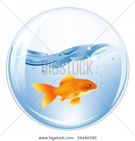 Glasses Ball With GoldFish In Water Inside, Isolated On white