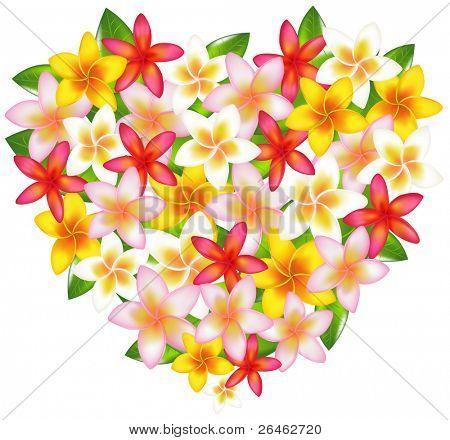 Herzen von bunten Fragipani Blumen, isoliert auf weiss