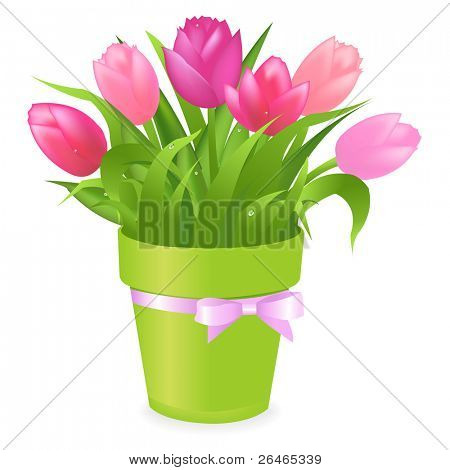 Bouquet Of Multicolored Tulips In Green Pot, Isolated On White Background, Vector Illustration