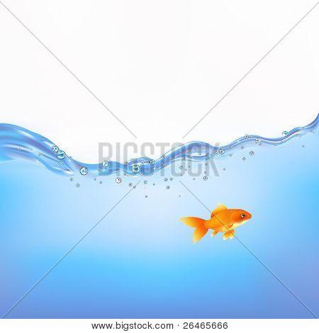 Goldfish Swimming In Water