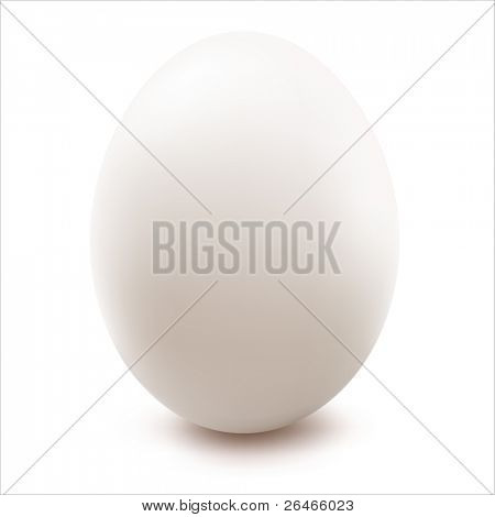 close up of Ei, isolated on white Background, Vector illustration