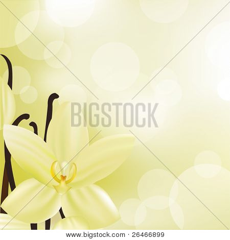 Vanilla Flower, Vector Illustration