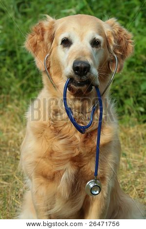 Dog holding stethoscope