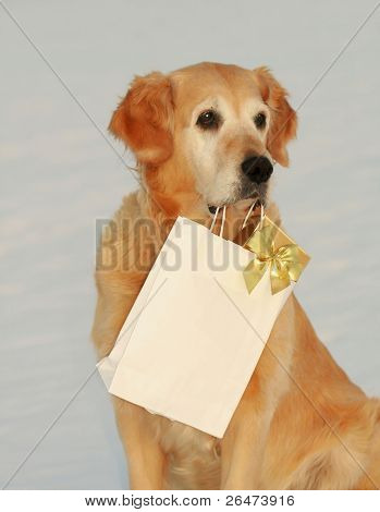 "My dog -"" Golden retriever "" like dog, which bears presents"