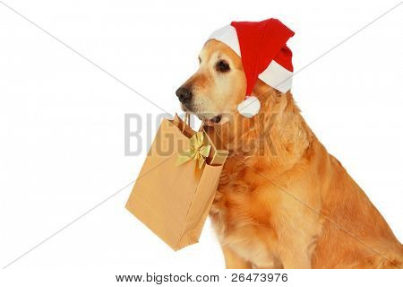 "My dog   - "" Golden retriever "" like dog -santa claus , which bears presents on white background"