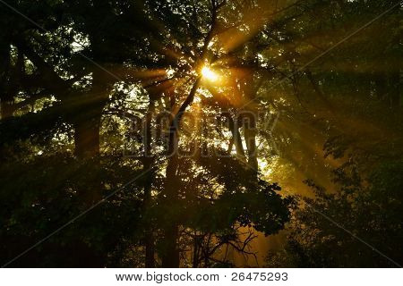 Sunup among trees and solar beam of rays