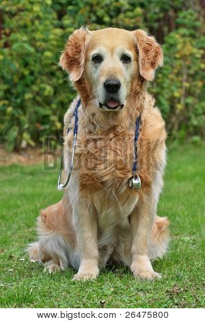 Dog with stethoscope on garden