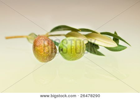 Olive on branch stock photo