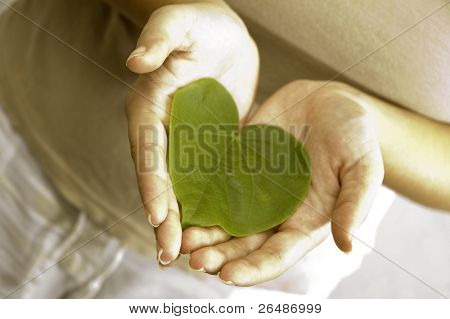 Care for the plants - Isolated hands holding a heart shaped green leaf