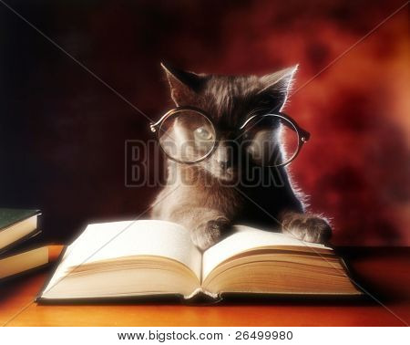 gray cat with glasses reading a book