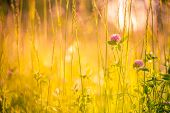 Nature Background Concept. Beautiful Summer Nature Meadow Background. Flowering Green Meadow On Spri poster
