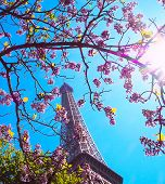 Paris, Eiffel Tower On A Background Of Pink Flowers, Magnolias, Green Trees. Spring In Paris poster