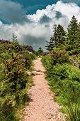 A Path In Dartmoor National Park, Devon, United Kingdom poster