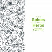 Hand Drawn Herbs And Spices Background. Vintage Organic Indian Kitchen And Asian Spices Vector Cooki poster