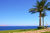 Egypt Red Sea Sinai Peninsula Sharm El Sheikh Landscape Seascape Tourism Scenic View Of The Sandy Be poster
