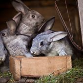 picture of rabbit hutch  - Young rabbits popping out of a hutch  - JPG