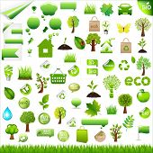 stock photo of mountain-ash  - Collection Eco Design Elements - JPG