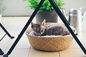 Devon Rex Cat Is Sleeping In The Basket Under The Table On The Balcony. Balcony Is Decorated With Gr poster